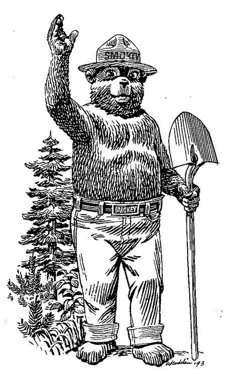 Salmon Challis National Forest Just For Kids Smokey The Bears Bear Coloring Pages Bear Drawing