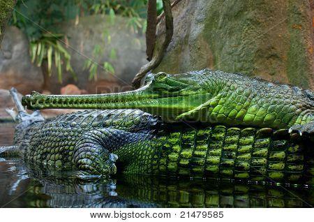 22+ Animals 3d Ar Alligator