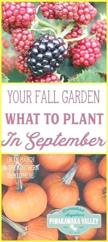Pin On When To Plant Vegetable Garden