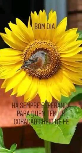 Vídeo girassol e passarinho Natureza