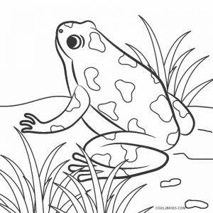 Dibujos De Ranas Para Colorear Paginas Para Imprimir Gratis Ranas Dibujos Paginas Para Colorear De Animales Paginas Para Colorear Para Ninos