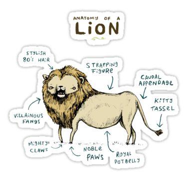Anatomy Of A Lion Sticker By Sophie Corrigan Pinterest
