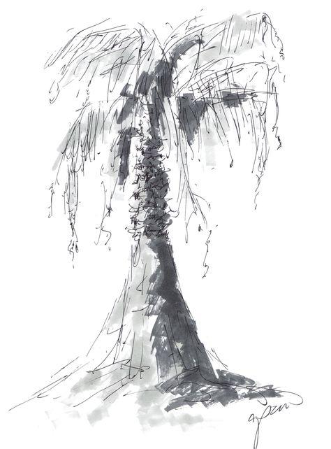 California Palm Sketch