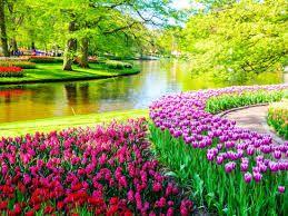 ac59e42598da54b57881a874589b9320 - Keukenhof Gardens Transportation And Skip The Line Ticket From Amsterdam