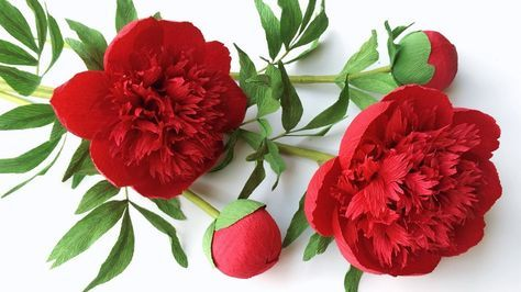Abc Tv How To Make Red Charm Peony Paper Flower From Crepe Paper Craft Tutorial Youtube Paper Flower Tutorial Crepe Paper Crafts Paper Flowers Craft
