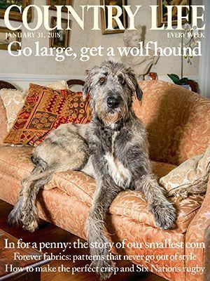 Pin By Suzanne On Irish Wolfhound Wolfhound Irish Wolfhound Cat Breeds