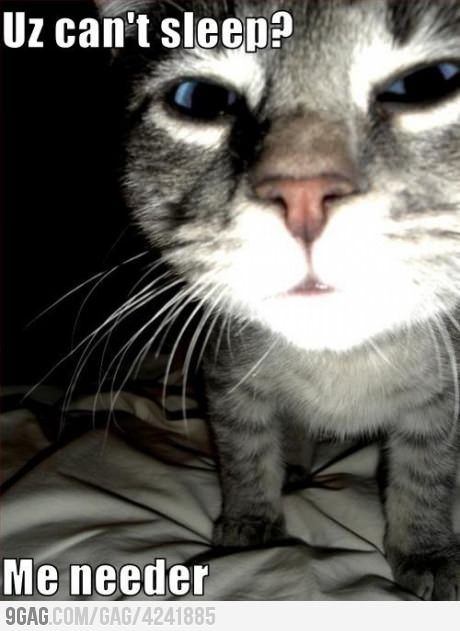 This Is My Zoey Always Waking Me Up I Get It This Is My Walter In The Light Of My Phone Because No Funny Animal Pictures Funny Cats Funny Animals