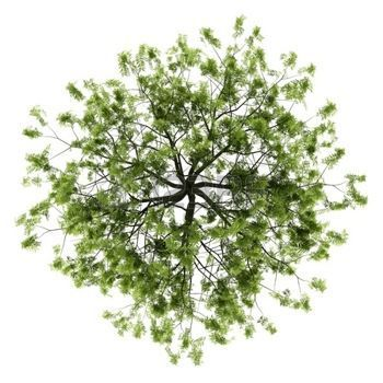 Image Result For Plants In Plan View Tree Plan Photoshop Trees Top View Tree Photoshop