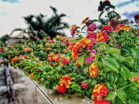 Gardening Guide 284 20190707051051 53 Gardening 61938 Your