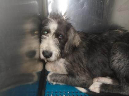 Animal Id T37055727 R Nspecies Tdog R Nbreed Tmixed Breed Large Over 44 Lbs Fully Grown X2f Mix R Nage T3 Years 1 Dog Adoption Dogs And Puppies Animals