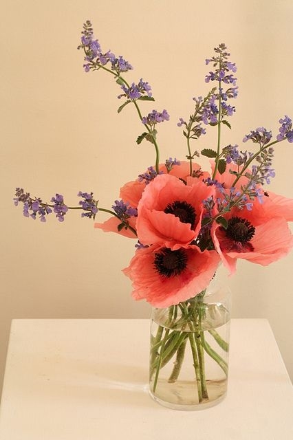 Poppies - a pretty and simple arrangement Arrangements Ikebana, Floral Arrangements, Fresh Flowers, Beautiful Flowers, Poppy Flowers, Pink Poppies, Exotic Flowers, Yellow Roses, Colorful Flowers