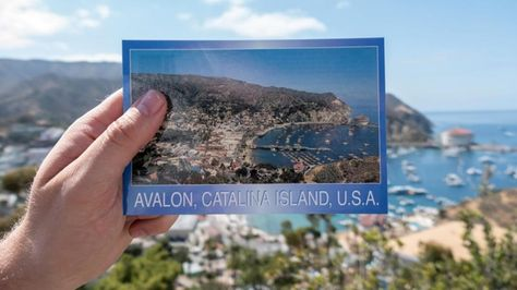 Catalina Express Two For One Birthday Deal Birthday Deals First Birthdays Birthday