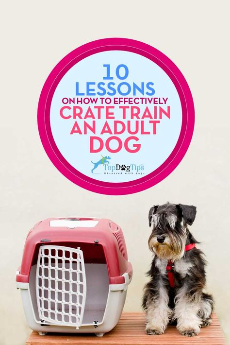 10 Lessons On Effectively Crate Training Adult Dog Crate