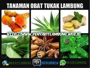 Pin Oleh Yunani Di Obat2an Herbal Tanaman Obat Tanaman Herbal Alami