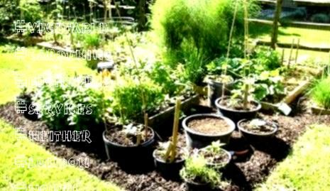 Vegetable Gardening Beginners Services Neither London North