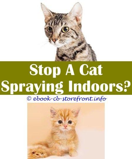 Cat Spraying Vs Uti