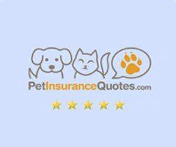 Best Pet Insurance Pet Insurance Pet Insurance Reviews Pet