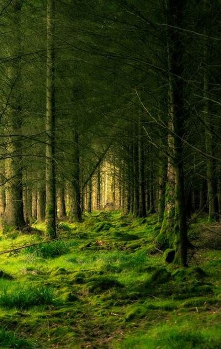 38 Ideas For Photography Nature Woods Paths Photography Nature Photography Forest Photography Beautiful Forest