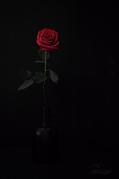 Rosas By Isabel Lopez On 500px Rose Wallpaper Red Roses Wallpaper Flower Phone Wallpaper Dark red rose aesthetic wallpaper