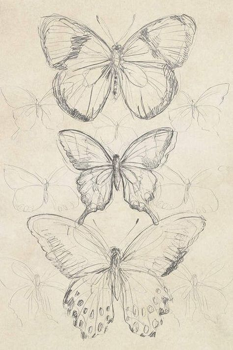 Vintage Butterfly Sketch I Canvas Artwork by June Erica Vess   iCanvas