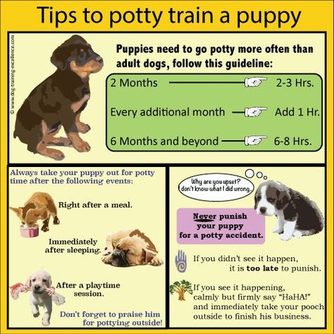 Tips Hacks For Your Dog Potty Training Puppy Puppy Training Puppy Training Tips