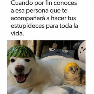 Pinterestca Pinterest Memes De Amor New Funny Memes Cute Love Memes Work Memes