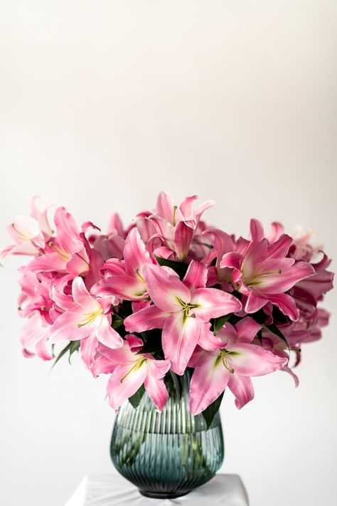 Tabledance is a beautiful shade of pink, our favourite oriental lily variety. They will arrive with large pink buds and explode into a bold pink vase of joy. We pride ourselves in growing extra special varieties so we can give you the most joy you can have from flowers. Once these burst open in your vase you will soon realise how glorious lilies can be. Buying your flowers direct from our farm means they will go from our glasshouse to your house in the shortest time possible, ensuring extra fres