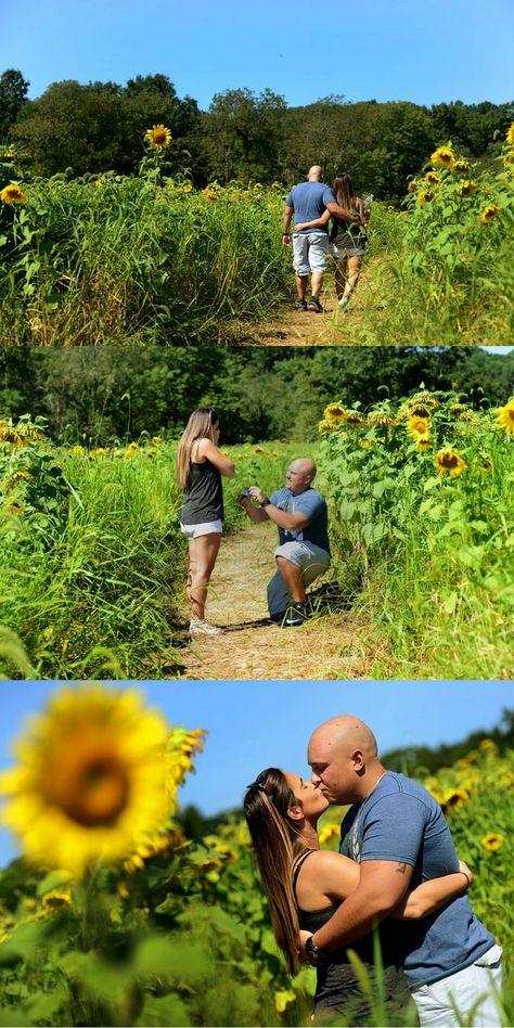 He popped the question in the middle of a sunflower field, and it's the perfect spring/summer proposal.