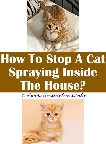 11 Striking Stop Cat Urinating In House Cat Spray Cat Repellant Male Cat Spraying