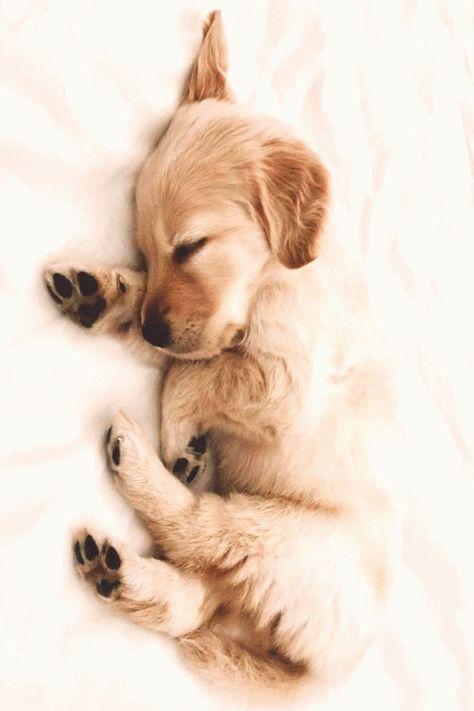 Cute Puppy Wallpaper Wallpapers Puppy Wallpaper Cute Cute Puppy Wallpaper Wallpapers Puppy Wall Cute Puppy Wallpaper Cute Puppies Best Dog Breeds