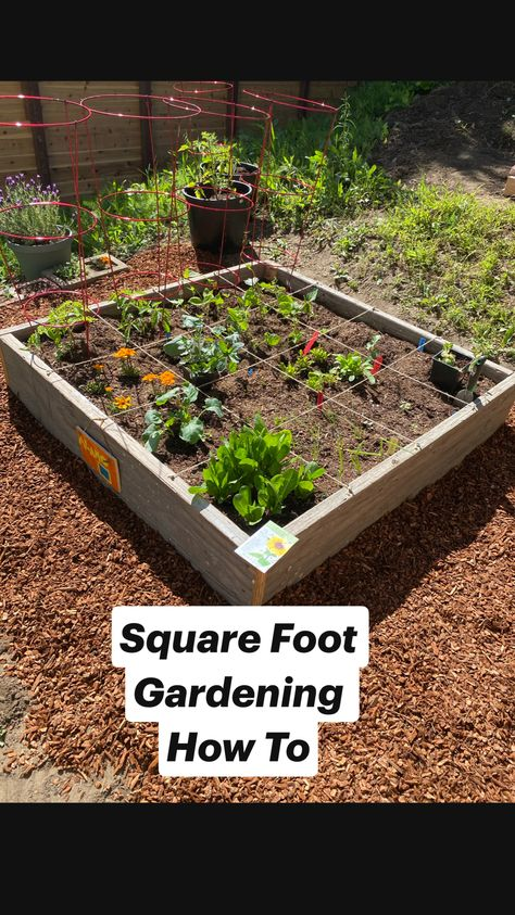Square Foot Gardening How To