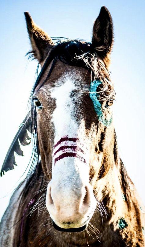 Horse Photos, Horse Pictures, Horse Halloween Ideas, Native American Horses, Indian Horses, Horse Wallpaper, Horse Costumes, Horse Grooming, Appaloosa Horses
