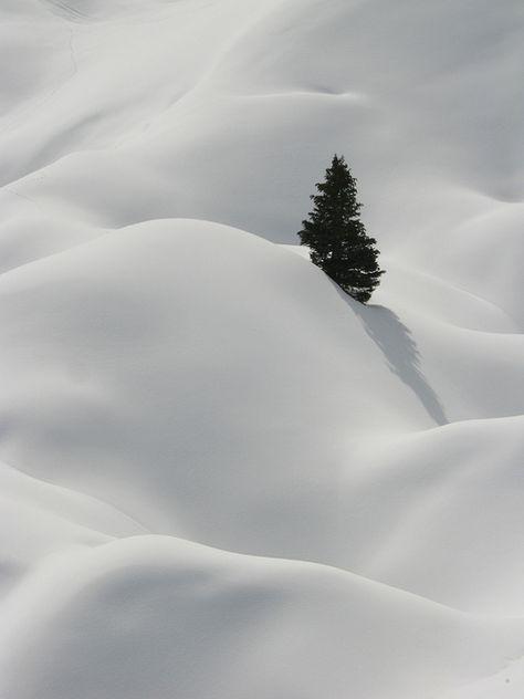 Lone pine in winter, La Plagne, French Alps Winter Szenen, Winter Magic, Winter Walk, Winter Holiday, Winter White, Snow White, French Alps, Snow Scenes, All Nature