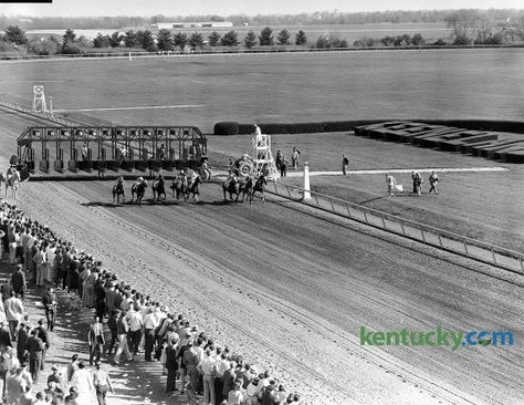 Start of the 35th running of the Blue Grass Stakes, April 23, 1959 at Keeneland in Lexington. Tomy Lee won the $32,550 race by a half a length. In the picture, the bay colt, who went off as the favorite, is the fourth horse from the rail. Nine days later, Bill Shoemaker and his English-bred mount won the Kentucky Derby, becoming only the second non-American bred horse to ever win the Run for the Roses. He did not run in the remaining two Triple Crown races because his trainer said he didn't…
