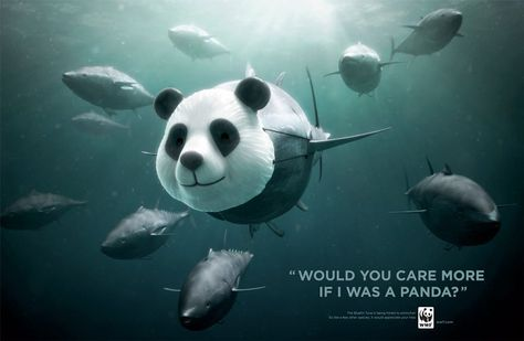 Powerful/ inspirational advertising campaigns for animals.