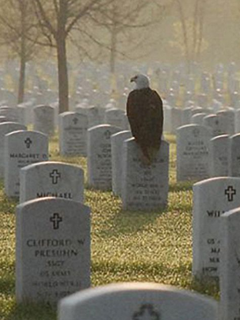 Photo of eagle on Fort Snelling gravestone touches hearts, goes viral.'The eagle couldn't have picked a better person' This beautiful photo was taken in 2011 at Fort Snelling National Cemetery in Minneapolis. The eagle had landed on the grave of Sgt Maurice Ruch, enlisted in the US Army Air Corps in Decmber of 1941. Known for his keen eye, he became a rifle marksman and was stationed in the Aleutian Islands. He served four years in the military and earned a bronze star.