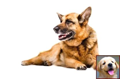 Potty Training A Puppy Free And Dog Training Courses In Mumbai With Images Dog Training Obedience Dog Clicker Training Puppy Training