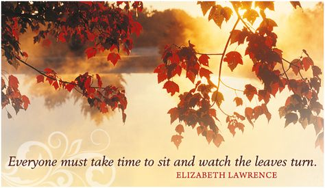 Free Leaves Change eCard - eMail Free Personalized Autumn Cards Online