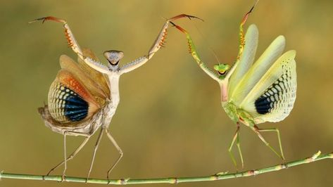 Comedy Wildlife Photography Awards: Animals in funny poses