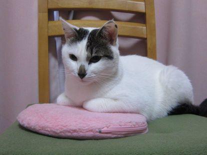 画像 めちゃカワ ネットで見つけた 湯たんぽにハマる猫 20選 Naver まとめ Cats Animals Odai