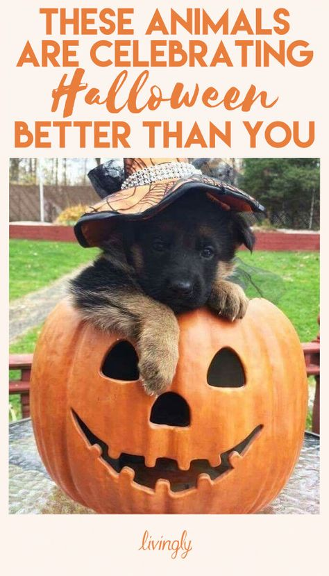 These pets are celebrating Halloween better than you ever could.