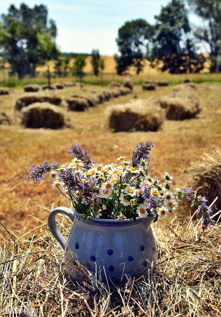 Fields and flowers and pots of prettiness.