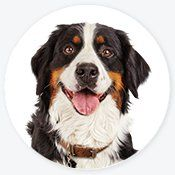 Pet Supplies Pet Food And Pet Products Petco With Images Cute Dog Collars Puppy Supplies Petco