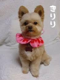 ポメプー カッ の画像検索結果 ミックス犬 検索