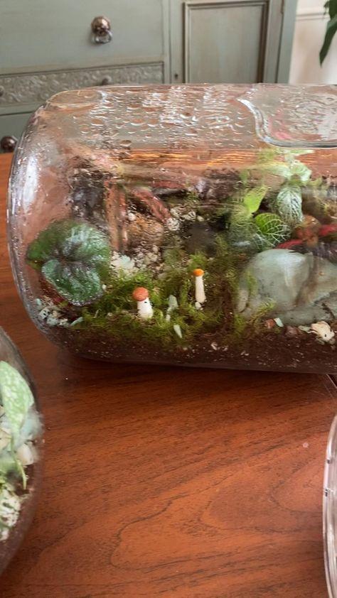 Terrarium Jar, Terrarium Plants, Making A Terrarium, Fish Tank Terrarium, Plants In Jars, Room With Plants, Plant Decor, House Plants Decor, Indoor Plants