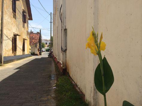 Flower in Galle..