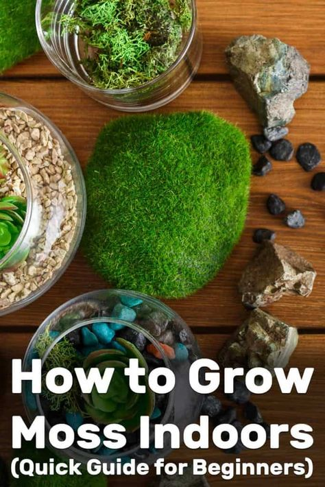 How to Grow Moss Indoors (Quick Guide for Beginners) – Garden Tabs - Modern Design Succulents Garden, Garden Plants, Indoor Plants, House Plants, Succulent Planters, Fruit Garden, Hanging Planters, Air Plants, Cactus Plants