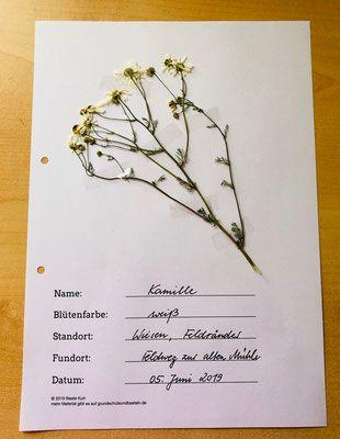Herbarium Herbarium Vorlage Heilpflanzen Pflanzen