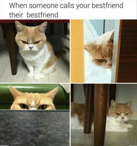 Or when someone calls you their best friend but you know you aren't actually their best friend.