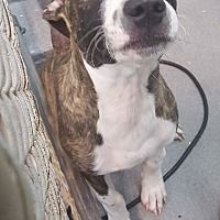 Pin On Let S Save All Animals Possible Please Help
